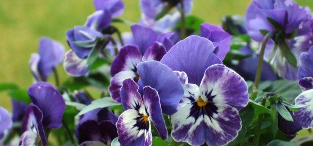 Blomster 16