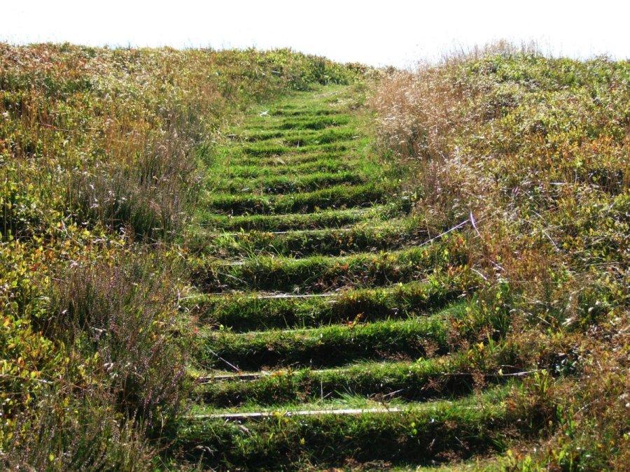 Busbjerg bog trappe