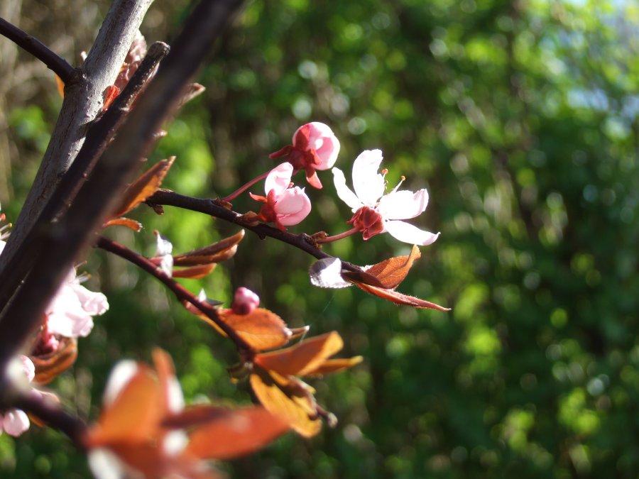 Forår blomster træ