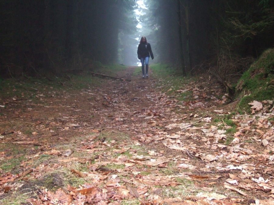 Skov efteraar Line