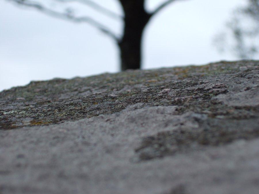 Sten træ 1